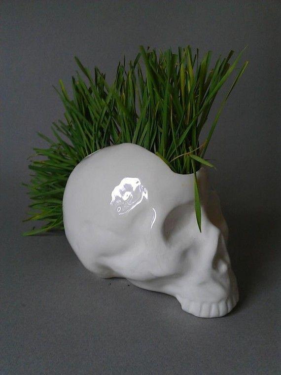 Scull Pot Plant
